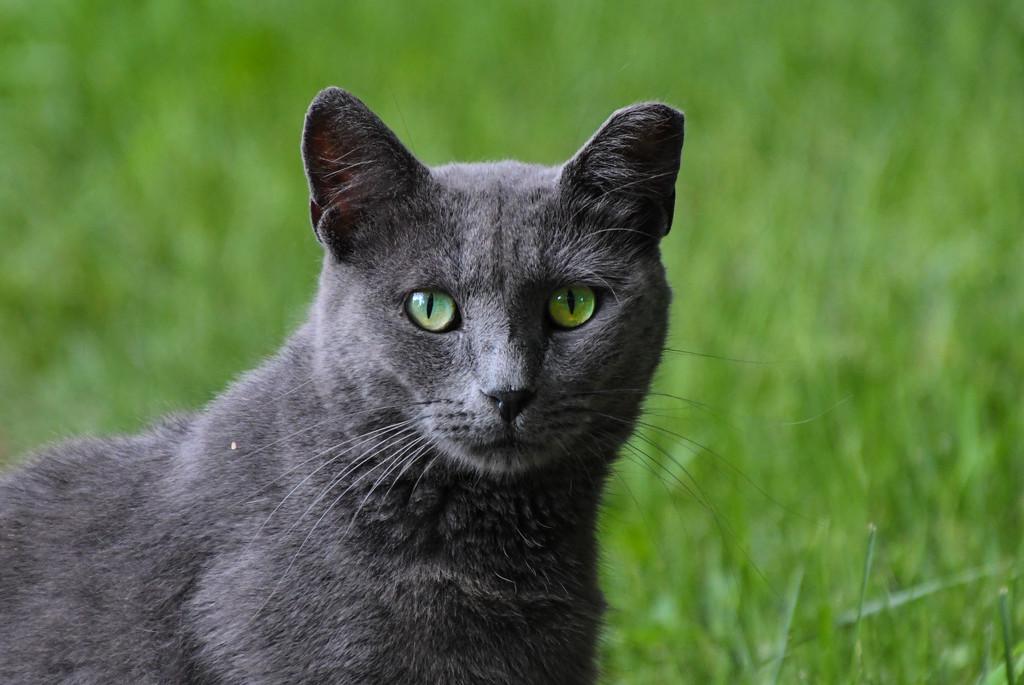 Green-eyed Beauty by kareenking