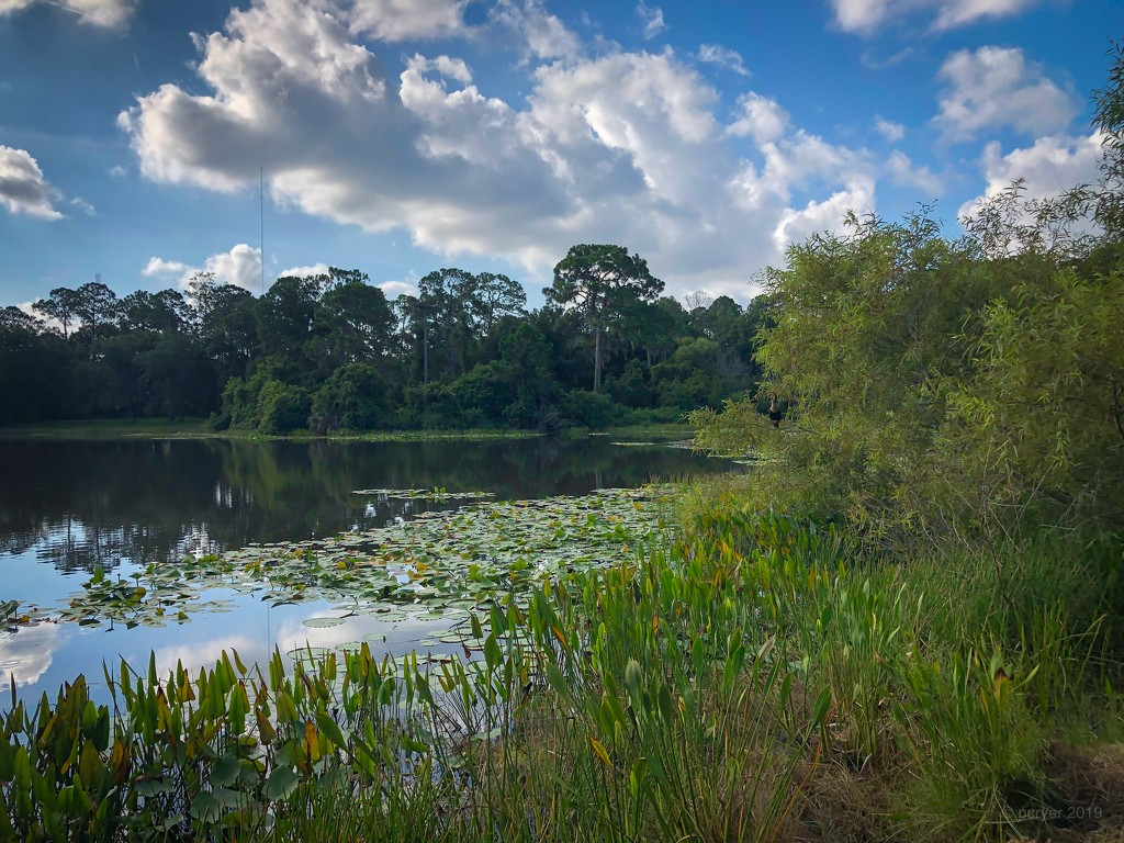 Florida Parks by paulacryer