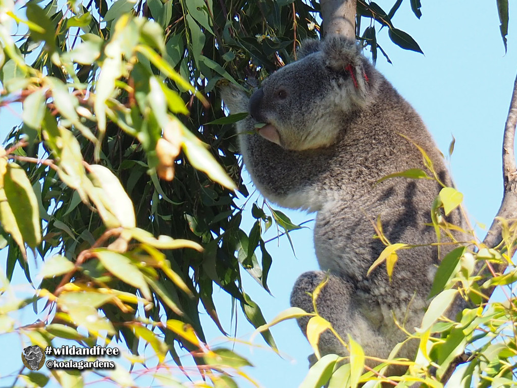 yum my favourite by koalagardens