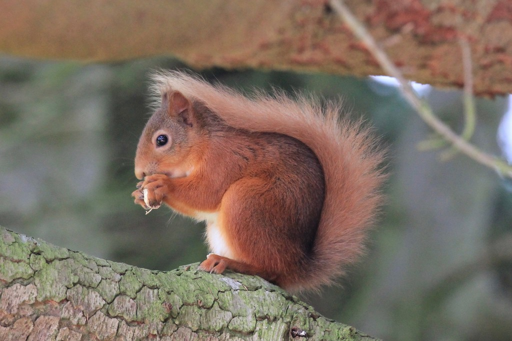 Tufty strikes another pose by jamibann