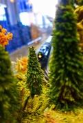13th Jul 2019 - The Grapevine model trains