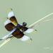 Dragonfly by lynne5477