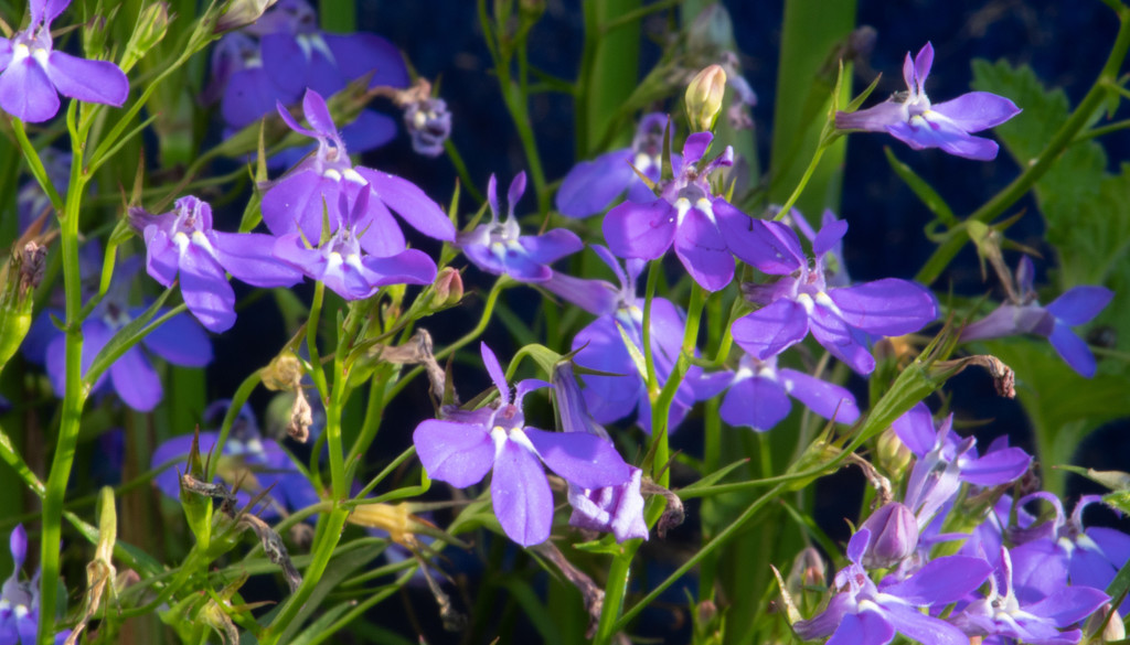 The Color Purple by tdaug80