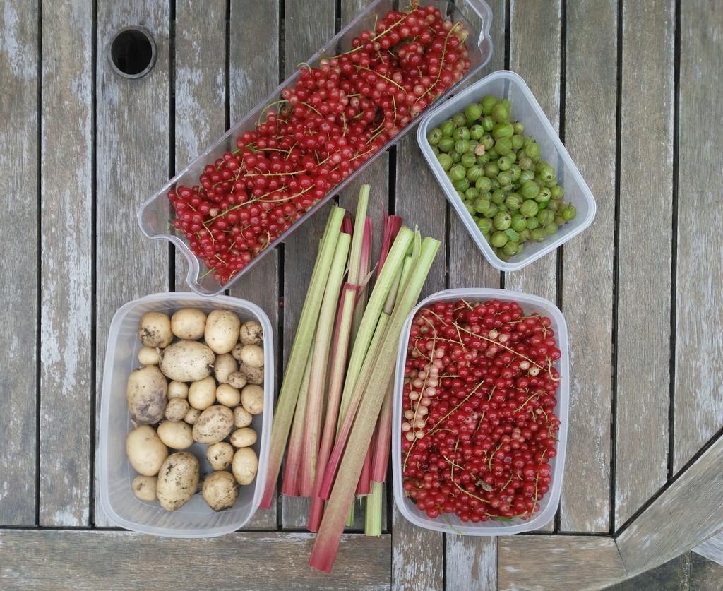Harvest by 30pics4jackiesdiamond