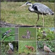 14th Jul 2019 - Birds and animals