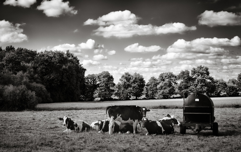 Cows, clouds and trees... by vignouse