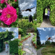 14th Jul 2019 - Kingsbrae Garden, St Andrews-by-the-Sea