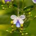 Butterfly Flower!