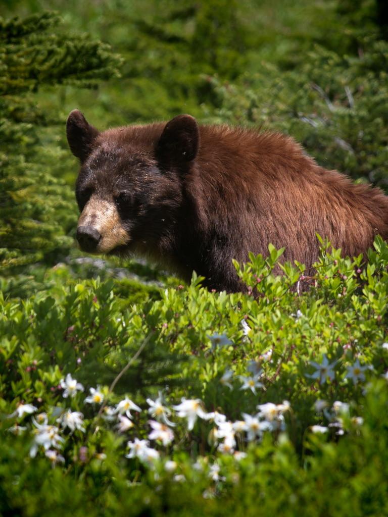 Found the Bear! by teriyakih