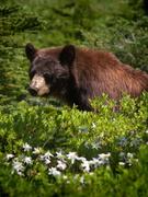 14th Jul 2019 - Found the Bear!