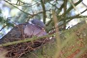 15th Jul 2019 - Pigeon's Nest