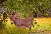 15th Jul 2019 - The winery donkey