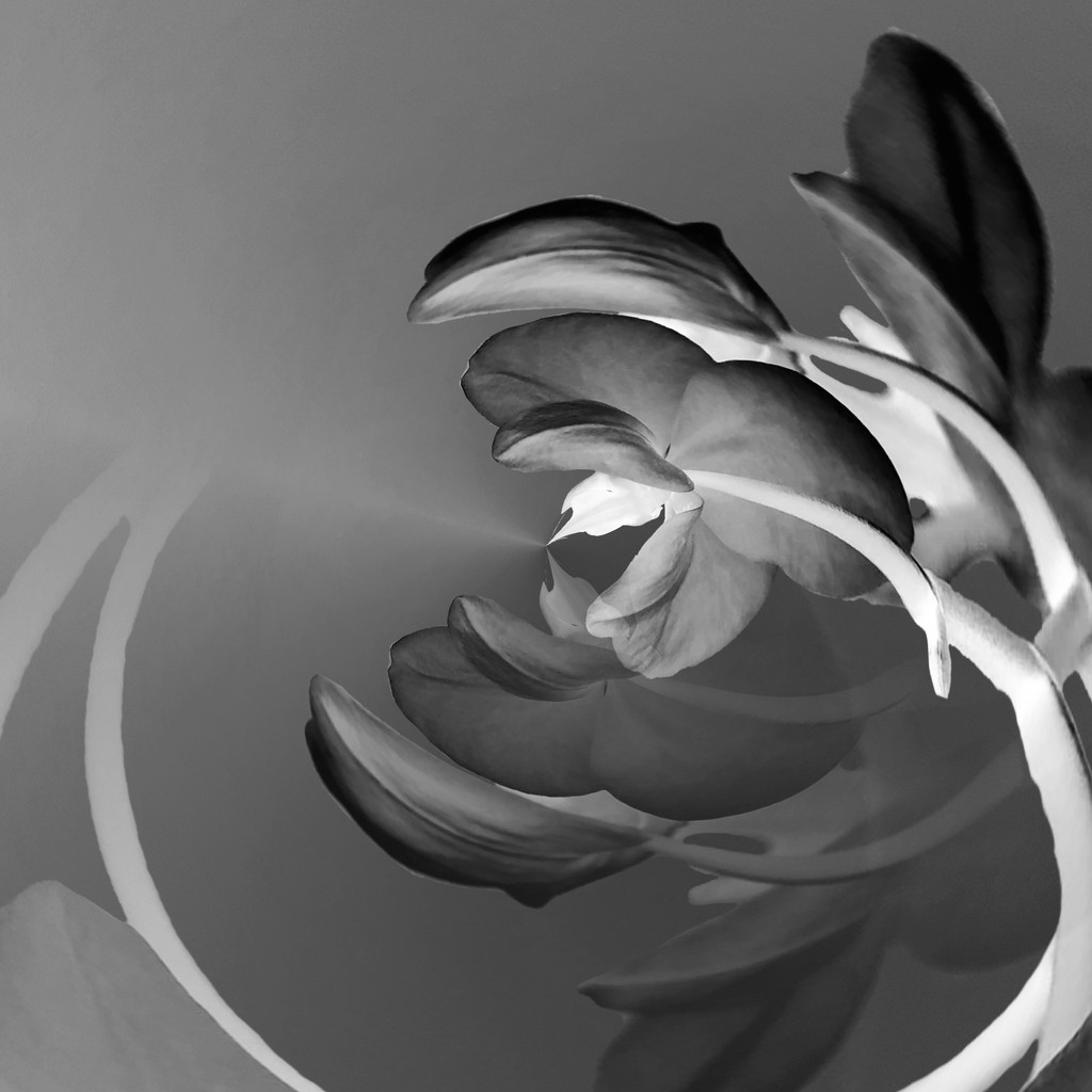 Abstract Flower in b&w by shutterbug49
