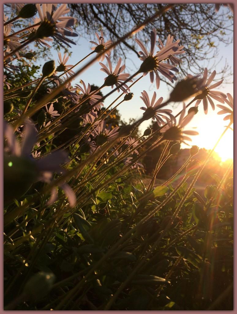 Flowery sunset by lmsa