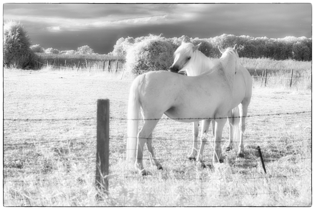 Two's Company by fbailey