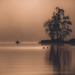 Dawn swim by adi314