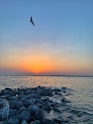 13th Jul 2019 - Seagull and sunset.