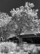 16th Jul 2019 - Converted to Infrared