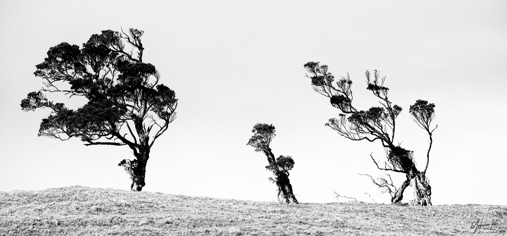 Prevailing Winds by yorkshirekiwi