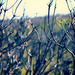 cliff top flora