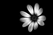 16th Jul 2019 - black & white