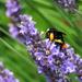 Pollen Overload by seattlite
