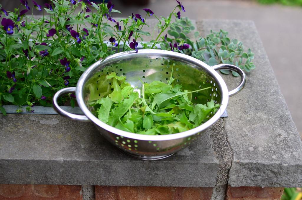 lettuce... by earthbeone