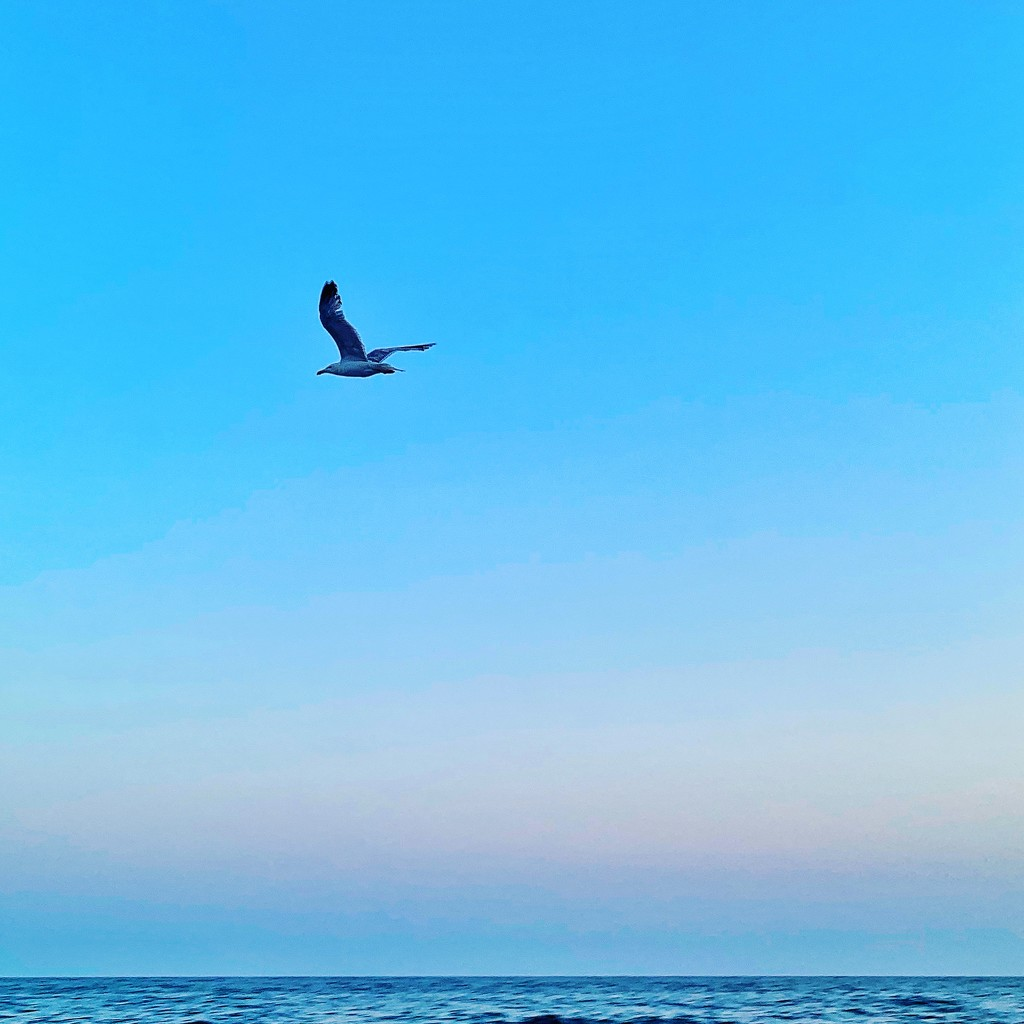 The flight of the seagull.  by cocobella
