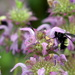 Buried in the Bee Balm