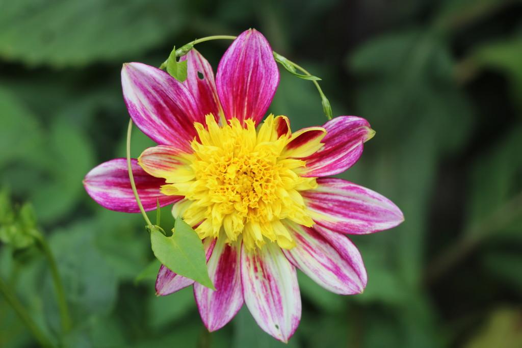 Flower in a garden by momamo