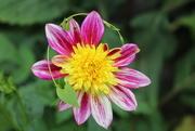 18th Jul 2019 - Flower in a garden