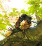 18th Jul 2019 - Dachshund In The Cherry Tree