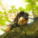 Dachshund In The Cherry Tree