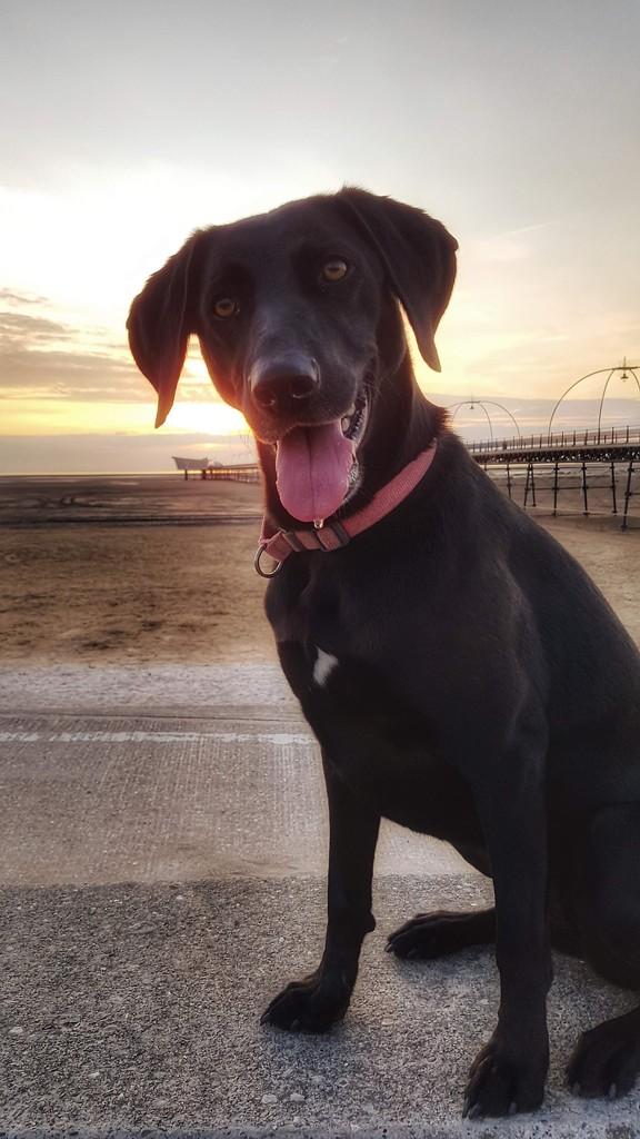 Sadie at sunset! by lyndamcg