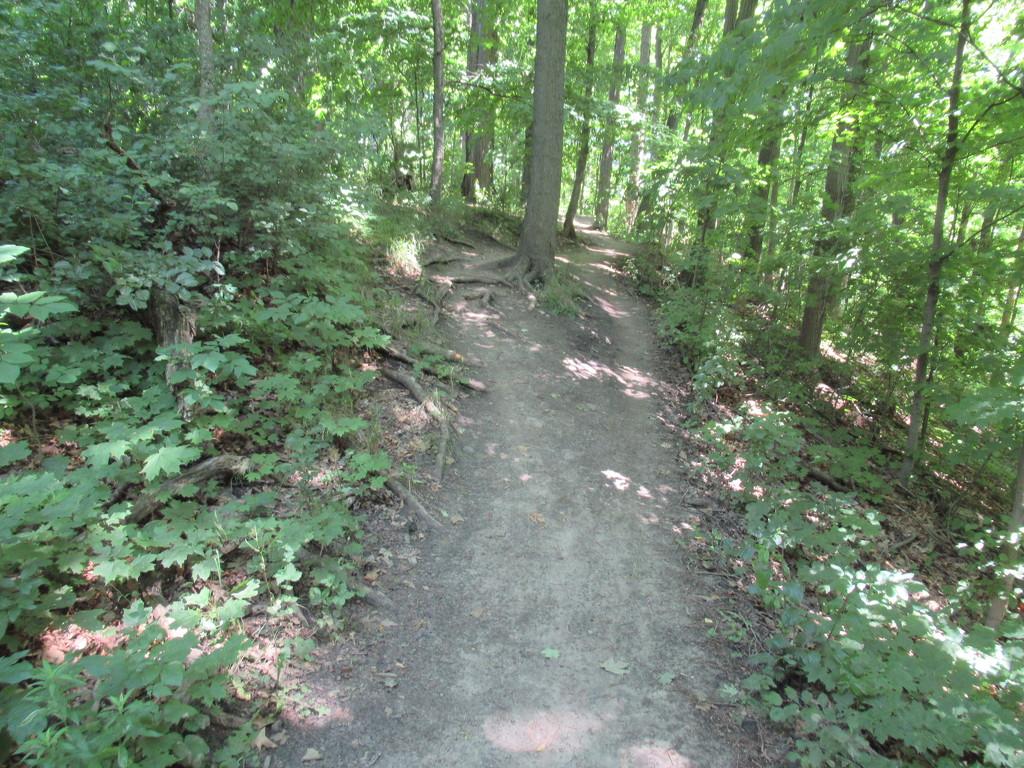 Walk on a narrow path by bruni
