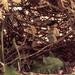 (Day 152) - Undergrowth