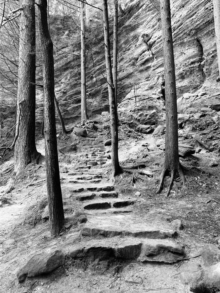 Walk in the woods by kdrinkie