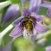 18th Jul 2019 - Does this pollen make my butt look big?