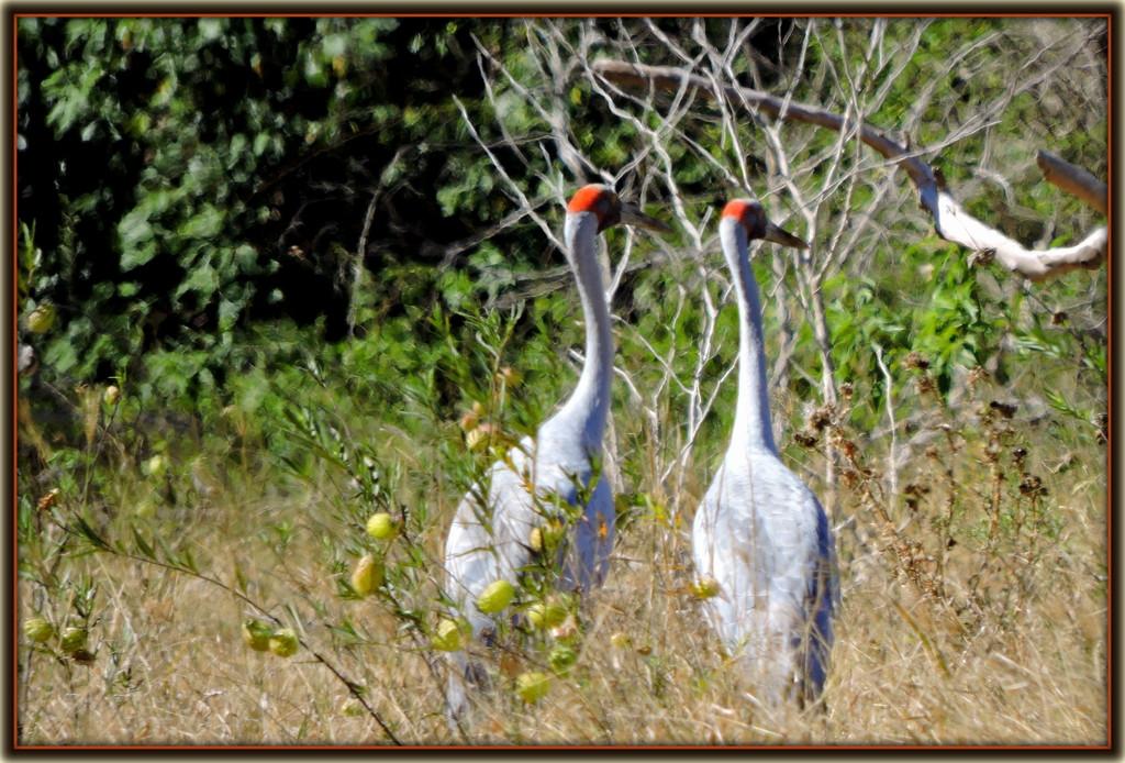 30. Crane by ubobohobo