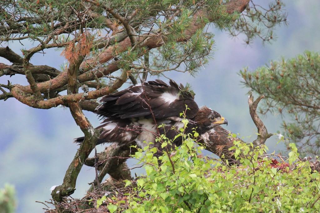 Ruffled Feathers by jamibann