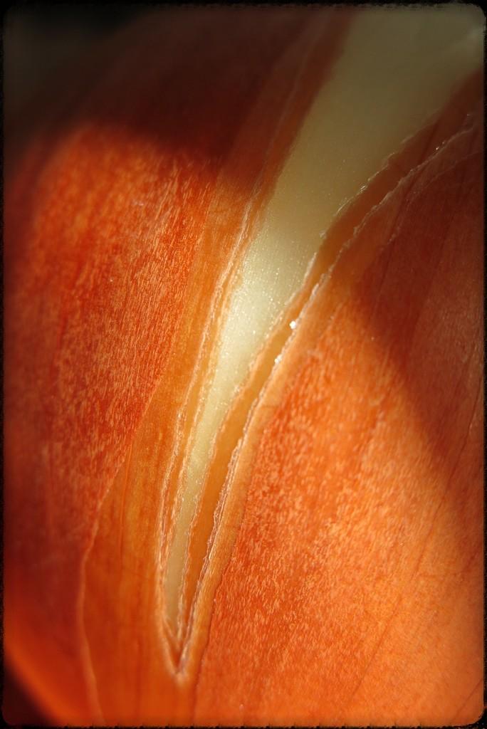 Onion tear by lmsa