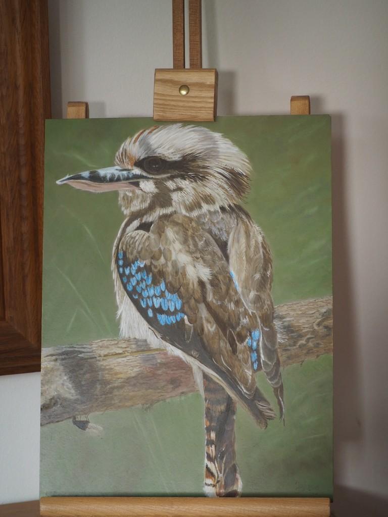 Kookaburra by jacqbb