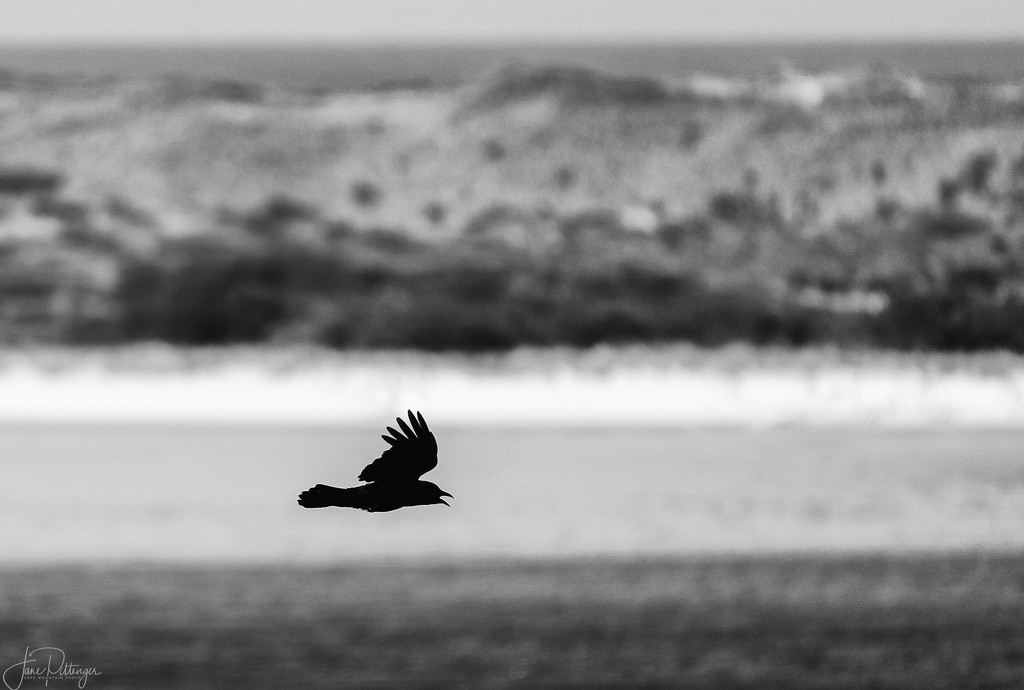 As A Crow Flies B and W by jgpittenger