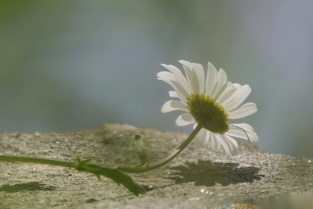 Growing Out of Rock? by milaniet
