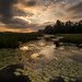 Sunrise on the lily pads  by radiogirl