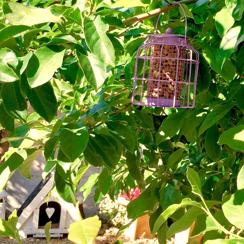 Lilac bird feeder  by lilaclisa