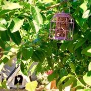 20th Jul 2019 - Lilac bird feeder