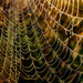 Lots of Webs - No Spiders in Evidence by milaniet