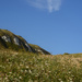 Cliffs and Cow Parsley