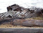 19th Jul 2019 - Spotted in the driftwood